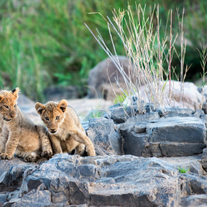 The secrets of the Sabi River